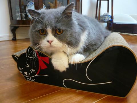 黒ネコさん_e0237625_2284395.jpg