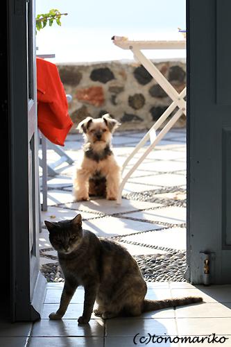 猫たちとバブー サントリーニ島_c0024345_16354165.jpg