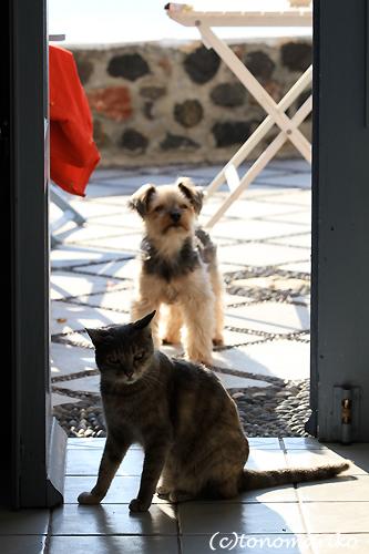 猫たちとバブー サントリーニ島_c0024345_16362227.jpg
