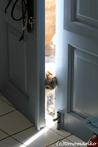 猫たちとバブー サントリーニ島_c0024345_16363794.jpg