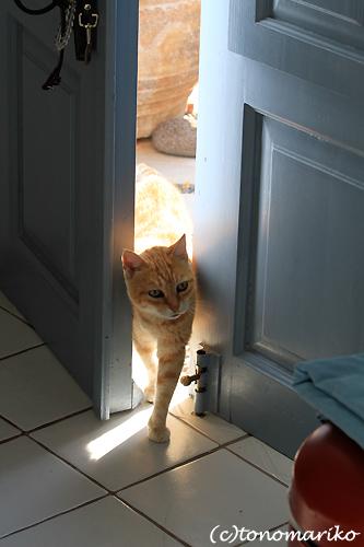 猫たちとバブー サントリーニ島_c0024345_16365421.jpg