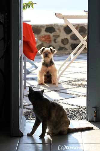 猫たちとバブー サントリーニ島_c0024345_1636556.jpg
