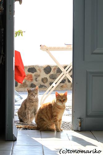 猫たちとバブー サントリーニ島_c0024345_1637988.jpg