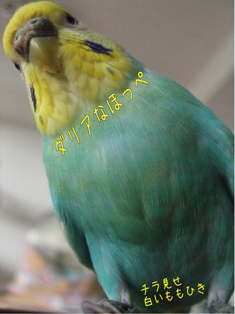f0149057_1730322.jpg