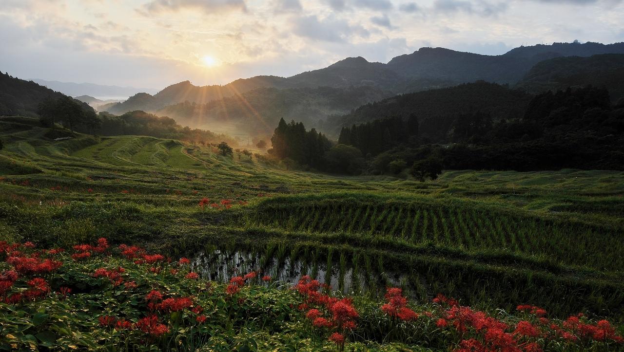 曼珠沙華の咲く朝 1_f0018464_1745892.jpg