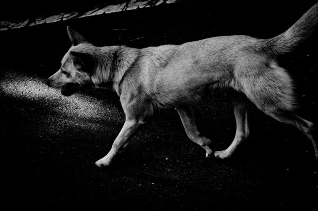 犬_c0170584_12331822.jpg