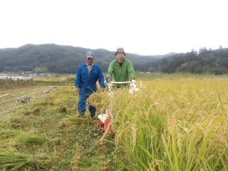 稲刈りをしています。_d0027486_9555711.jpg