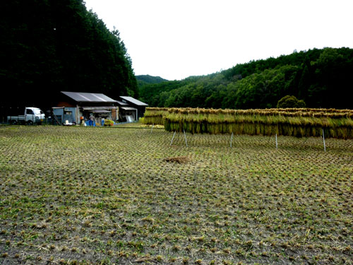 岩倉の稲刈り_e0048413_22575644.jpg