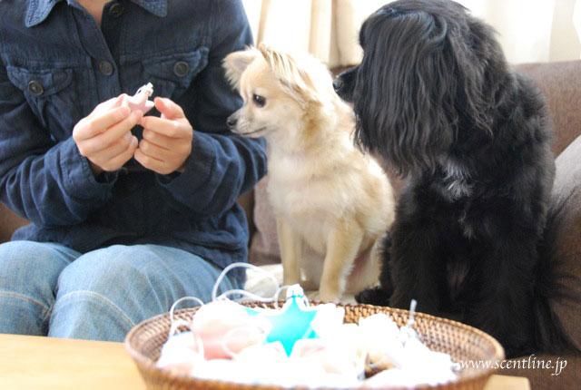 犬連れOK!クリスマスフラワーアレンジメント教室のお知らせ_c0099133_20412830.jpg