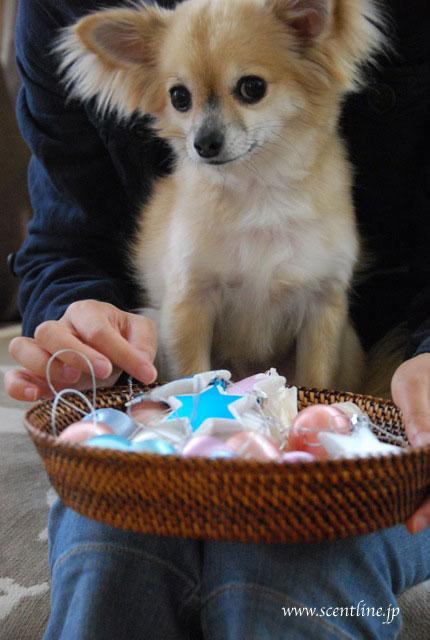 犬連れOK!クリスマスフラワーアレンジメント教室のお知らせ_c0099133_2041356.jpg