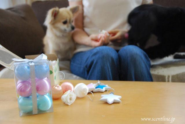 犬連れOK!クリスマスフラワーアレンジメント教室のお知らせ_c0099133_2042863.jpg