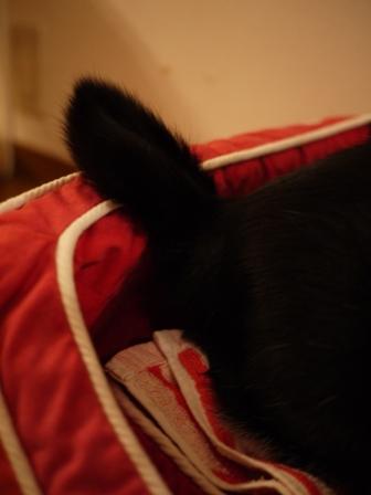 ちょっと休憩猫 空編。_a0143140_23493446.jpg