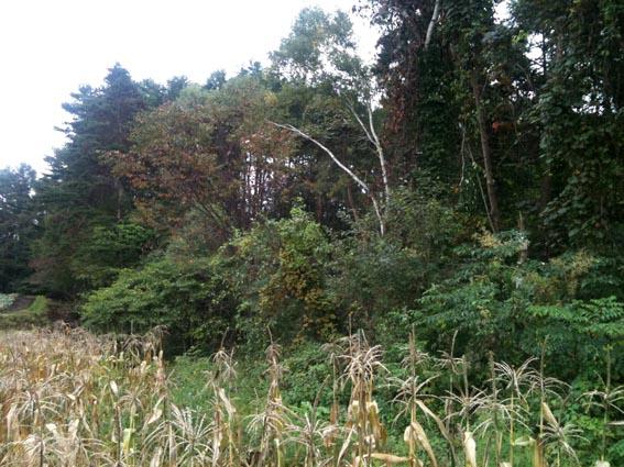 森林整備_c0137158_8481169.jpg