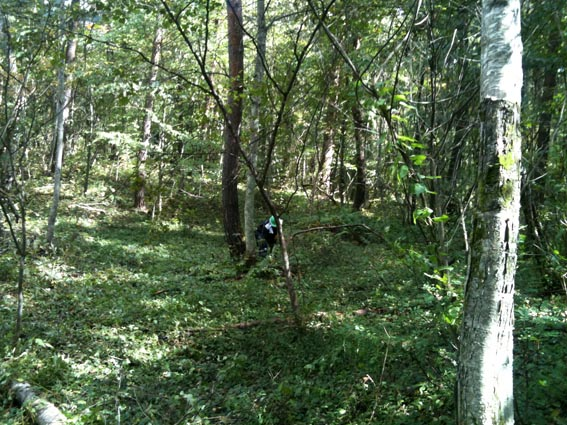 森林整備_c0137158_8552546.jpg