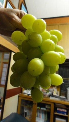 Super duper grapes_c0157558_22433835.jpg