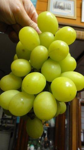 Super duper grapes_c0157558_2243457.jpg