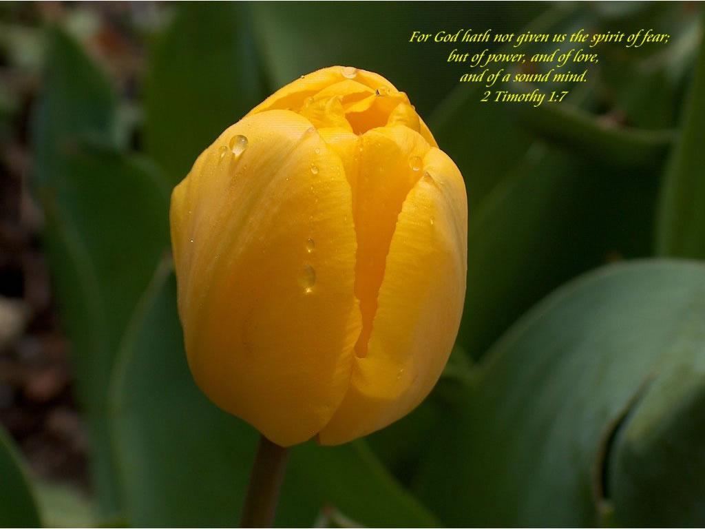 10月3日ミカ書4-7章『主が求めておられること』_d0155777_8434694.jpg