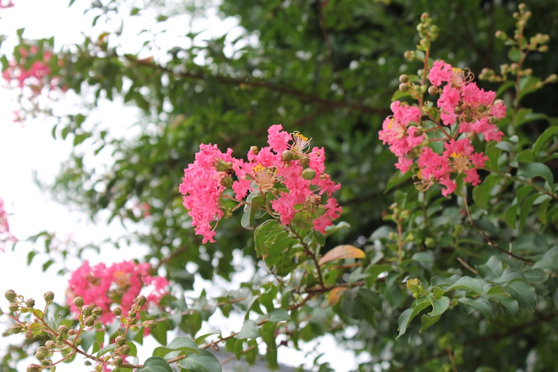 神倉神社(2011.8.24)_c0173978_2273891.jpg