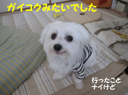 b0193480_15531225.jpg