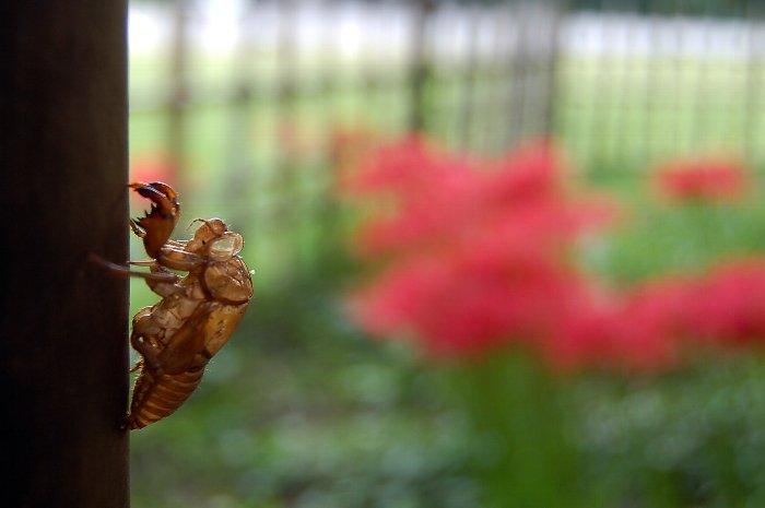 夏から秋へ_c0057390_20321064.jpg
