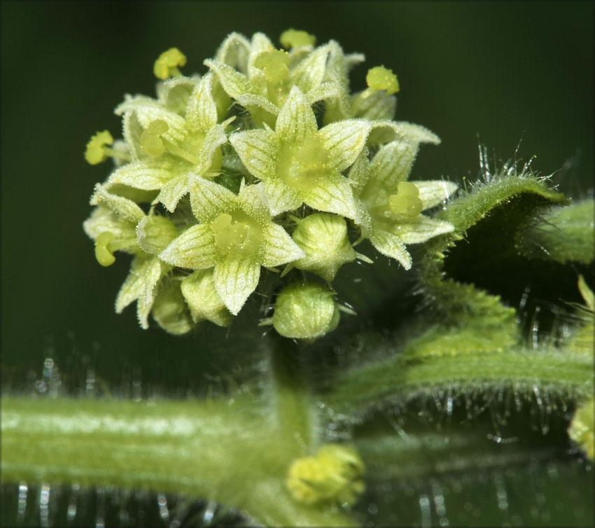 つる植物の話-5_d0163696_1722065.jpg