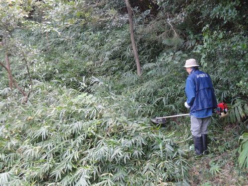 うみべの森を育てる会定例活動日:栗拾い_c0108460_17382868.jpg
