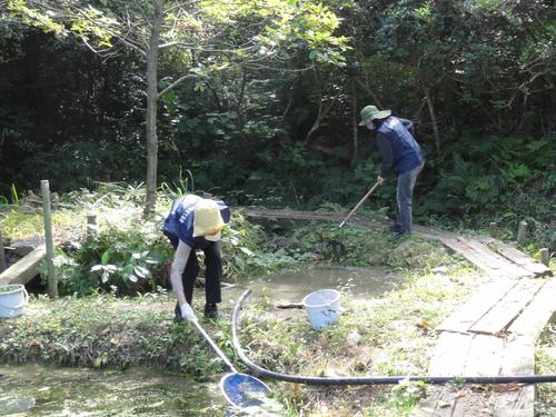 うみべの森を育てる会定例活動日:栗拾い_c0108460_1741279.jpg