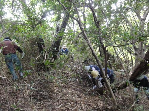 うみべの森を育てる会定例活動日:栗拾い_c0108460_17424537.jpg
