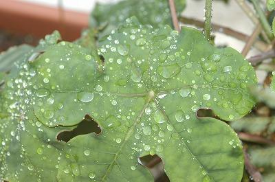 大雨洪水警報_c0180460_22332454.jpg