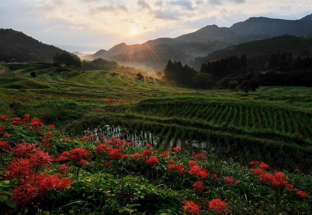 曼珠沙華の咲く朝 2_f0018464_6204961.jpg