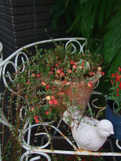 オークリーフ(紅葉、実物の秋)_f0049672_10435927.jpg