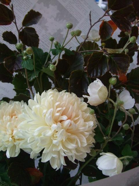 オークリーフ(紅葉と菊と秋明菊の花束)_f0049672_1713211.jpg