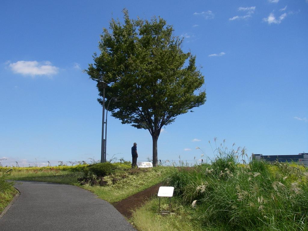 記念公園通信_b0172896_1747588.jpg