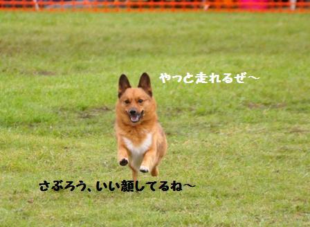 f0212597_6463230.jpg