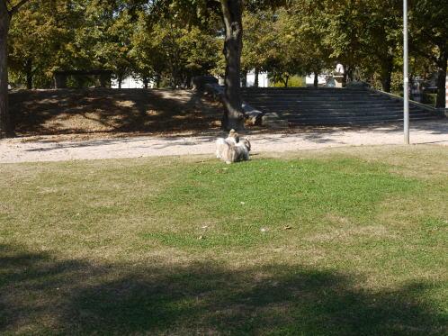 やっぱり公園がいいね♪_c0090198_4574164.jpg