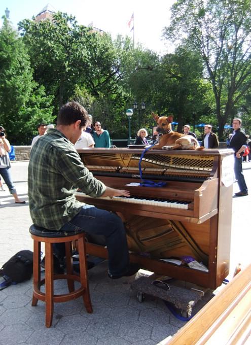 ピアノ持参でワンちゃんと全米を旅するニューヨーカー Piano Across America_b0007805_1382194.jpg