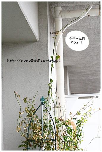 f0203406_9103556.jpg