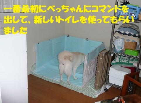 f0121712_0331993.jpg