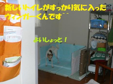 f0121712_8122273.jpg