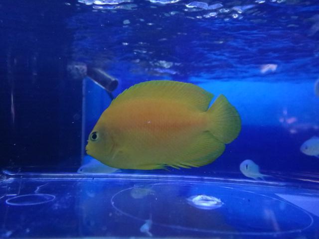 海水魚・水草・淡水魚_f0189122_1373825.jpg