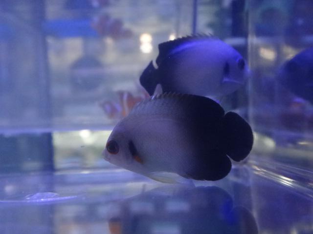 海水魚・水草・淡水魚_f0189122_1382068.jpg