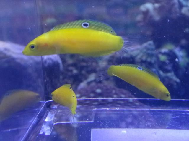 海水魚・水草・淡水魚_f0189122_1393668.jpg