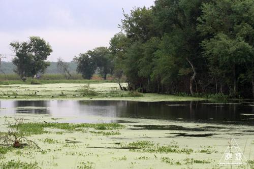 108 Brazos Bend State Park ~ワニの楽園~_c0211532_1638542.jpg