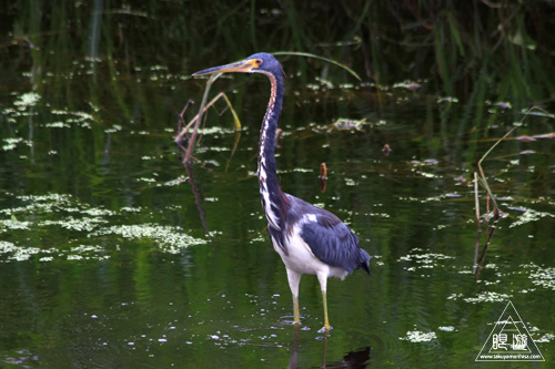108 Brazos Bend State Park ~ワニの楽園~_c0211532_1773100.jpg
