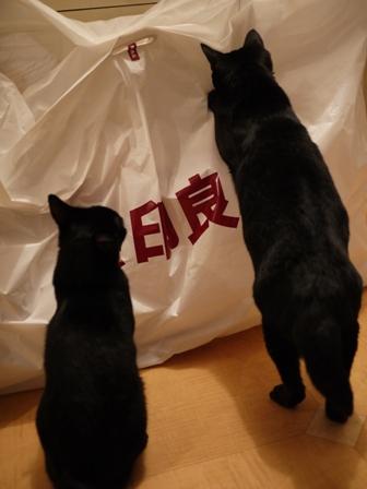 無印良品にタッチする猫 のぇるろった編。_a0143140_23574133.jpg