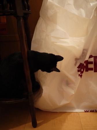 無印良品にタッチする猫 のぇるろった編。_a0143140_23584514.jpg