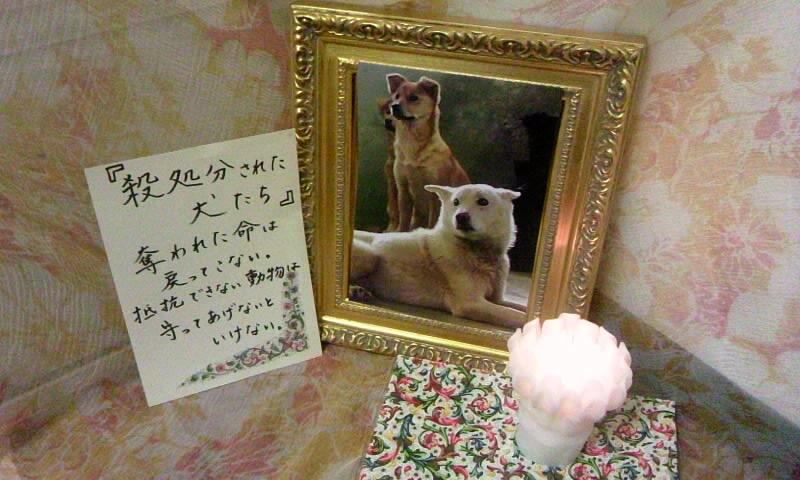 ☆2011年 みんなのキャンドルナイト☆_b0198356_1264795.jpg