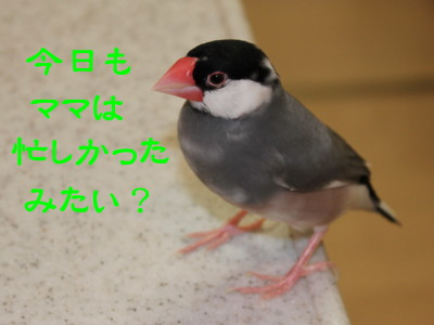 b0158061_1221224.jpg