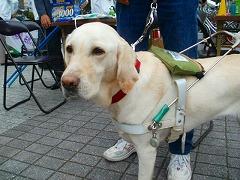 盲導犬育成募金_e0189870_8514616.jpg