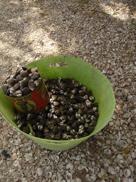 貝殻の島☆_b0207873_2023820.jpg